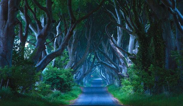 Les Dark Hedges, une mystérieuse allée de hêtres près de Ballymone